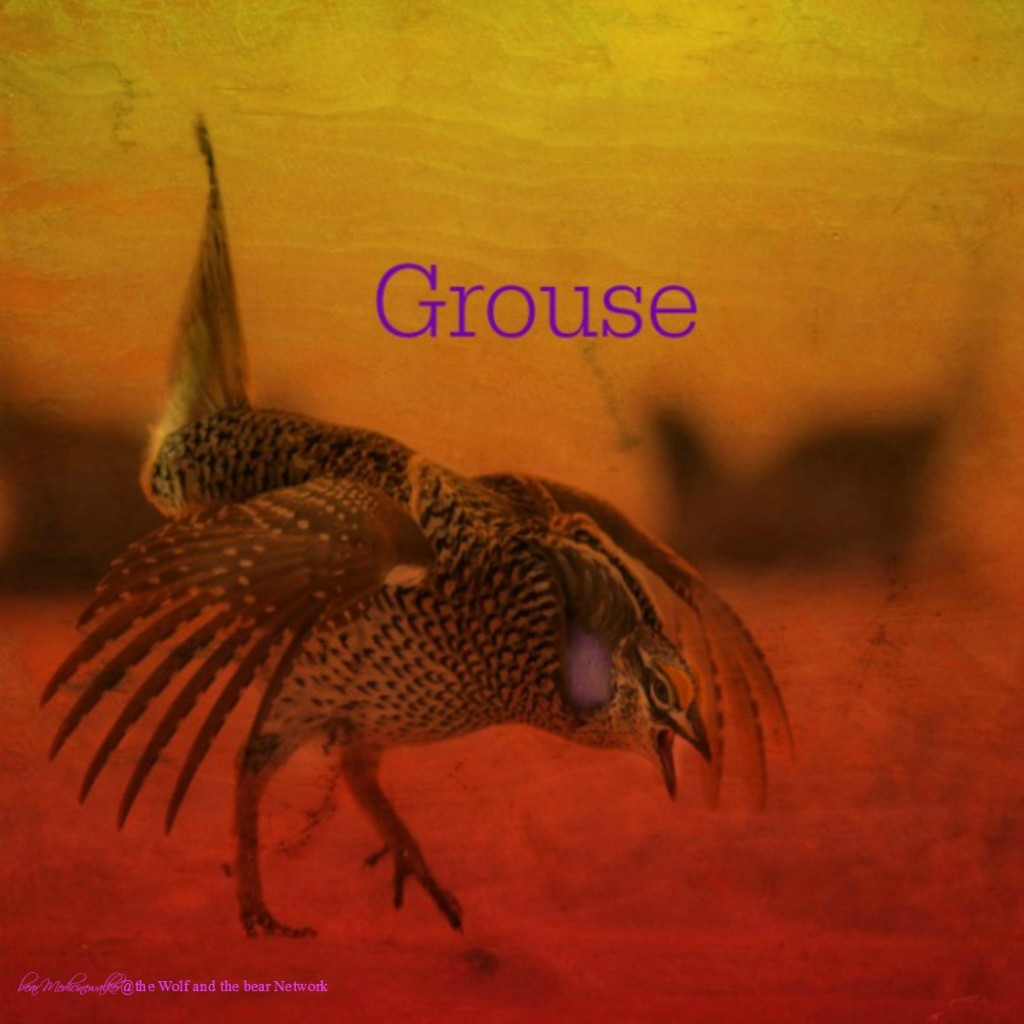card 14 Grouse 1122