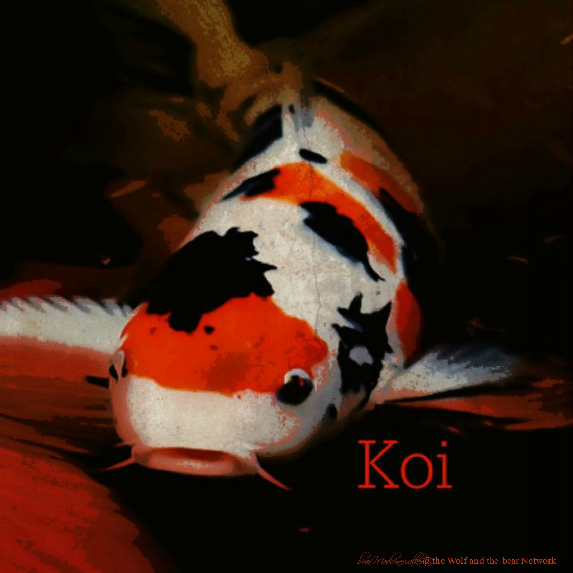 February 29, 2016 Totem Card of the Day – Koi sharing Neither Here ...