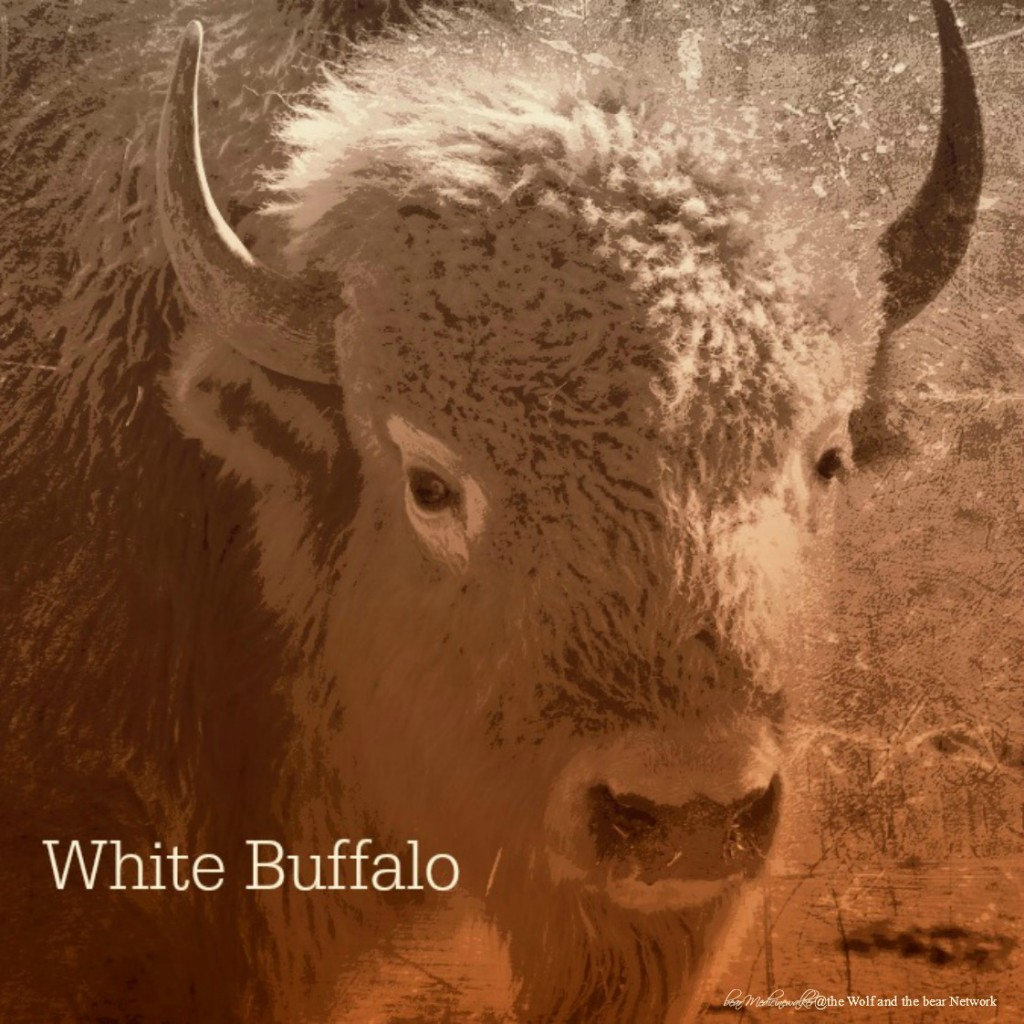card 38 White Buffalo 1122
