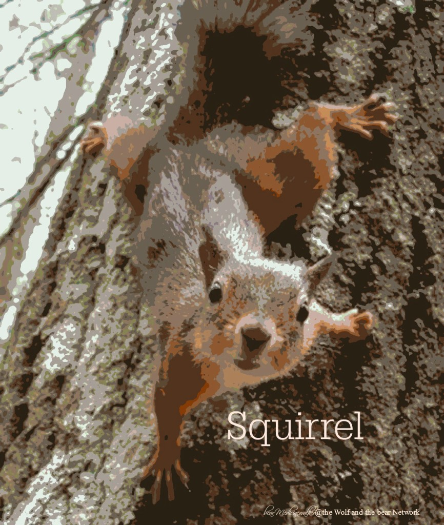 card 43 Squirrel 1122