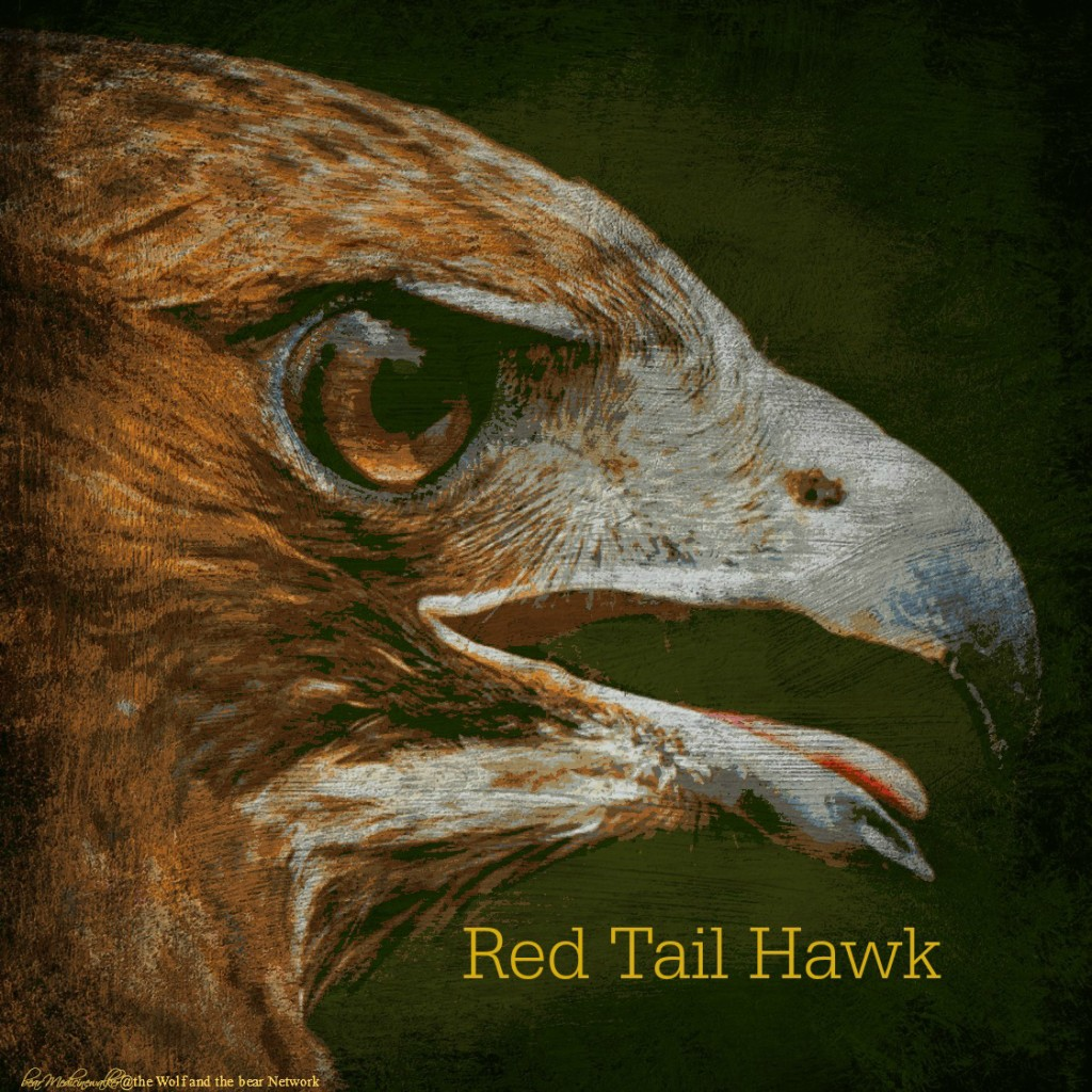 card 47b redtail hawk 1122