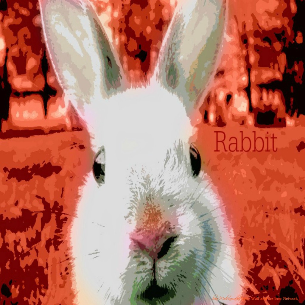 card 50 Rabbit