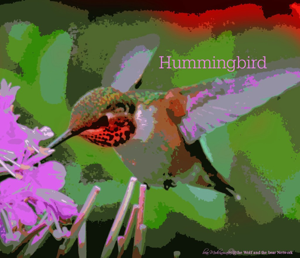 card 51 hummingbird
