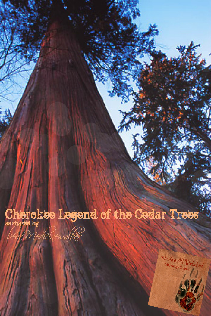 legend of the cedar