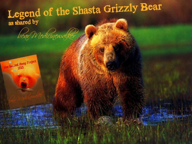 shasta grizzley