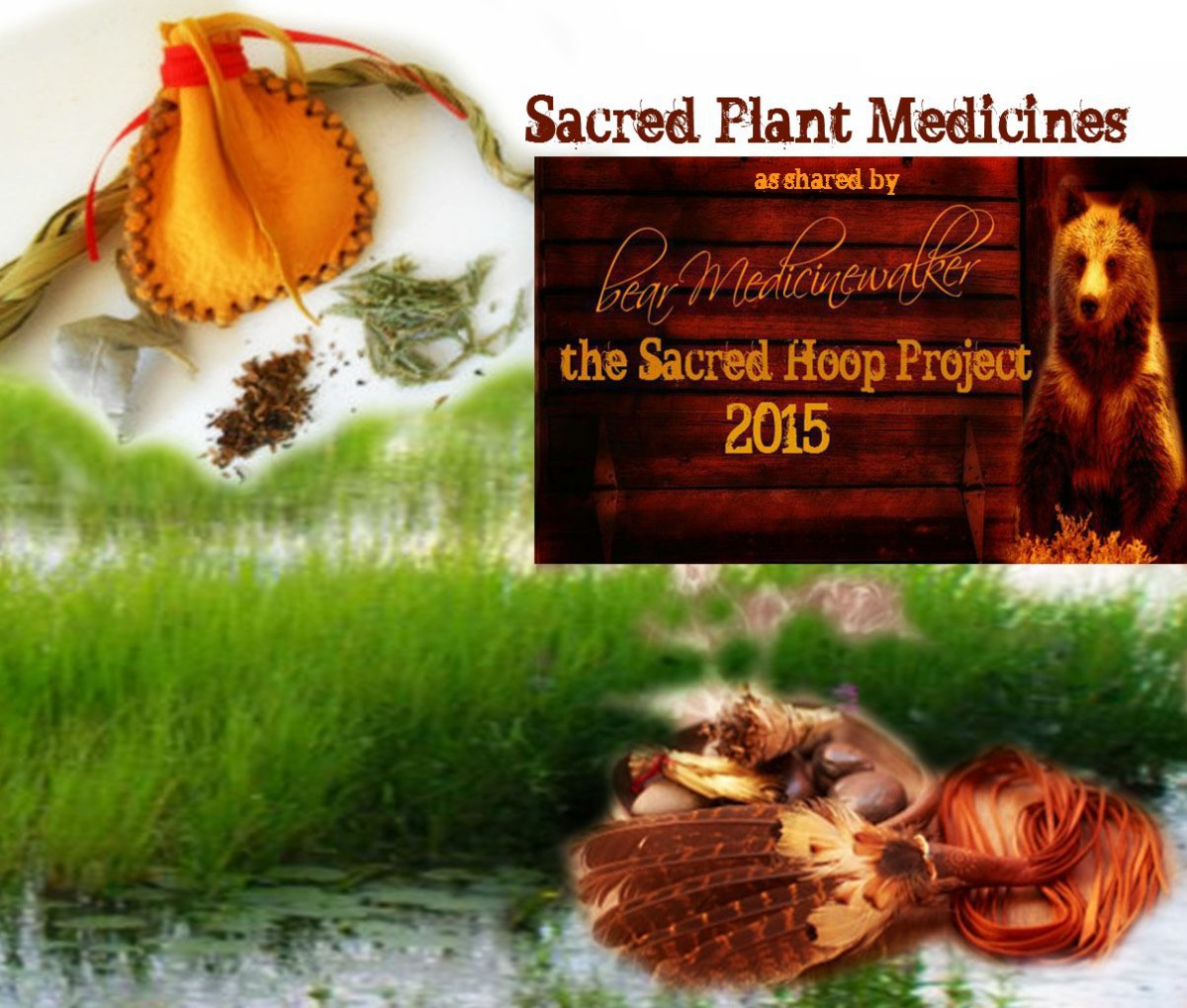 Sacred Plant Medicines as shared by bear Medicinewalker
