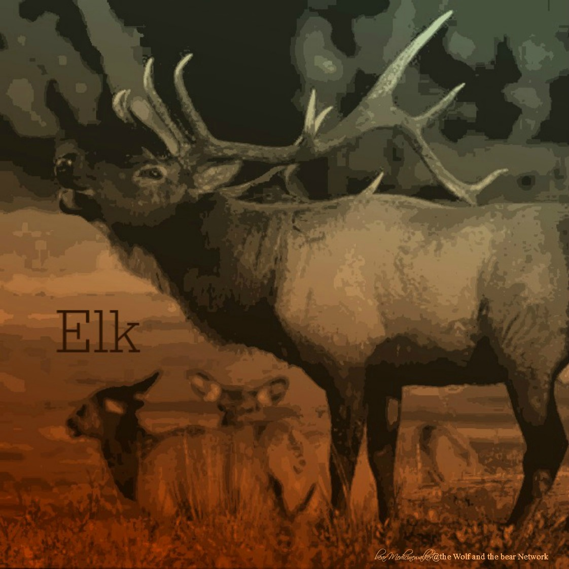 card 10 Elk 1122 - Copy