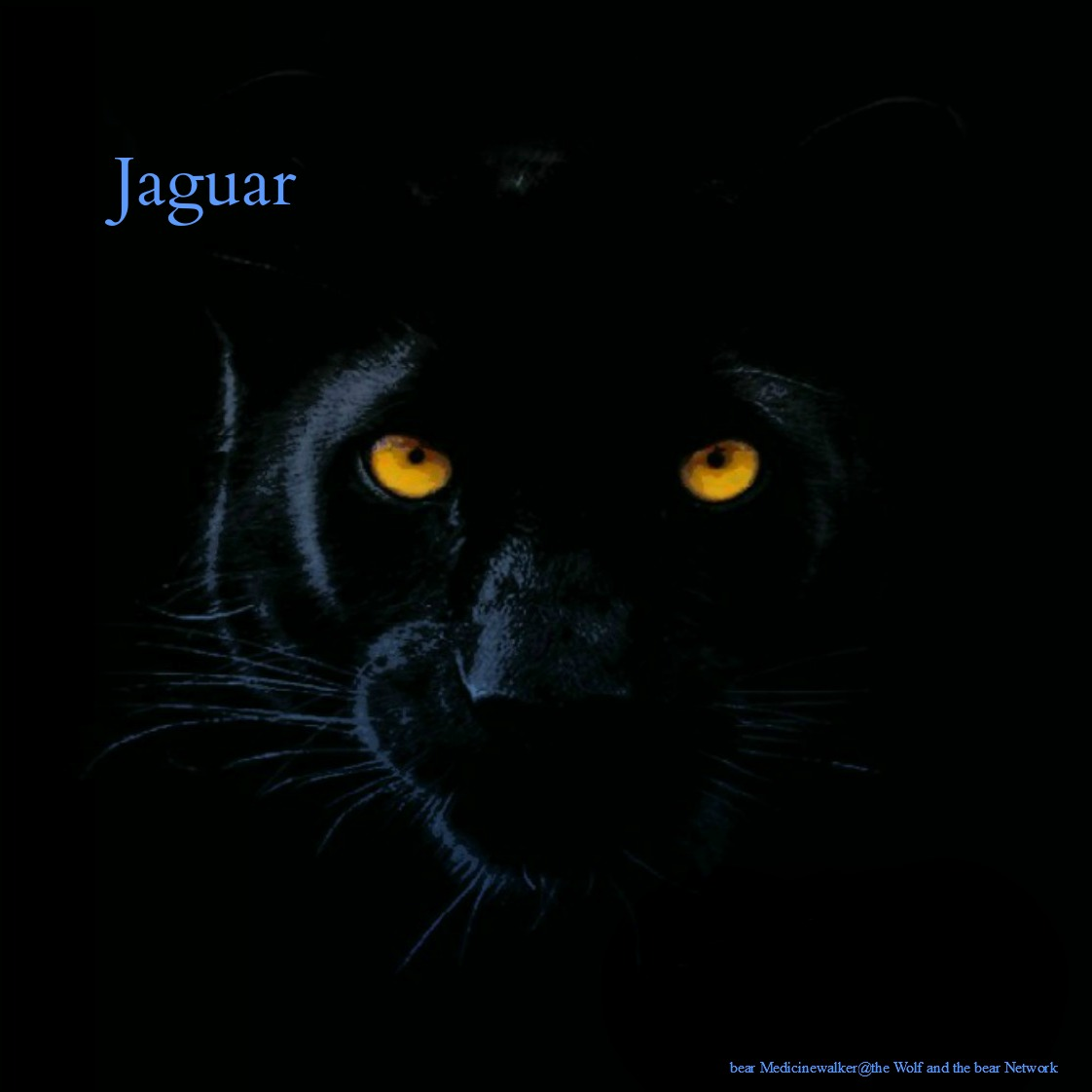 card 2 Jaguar 1122