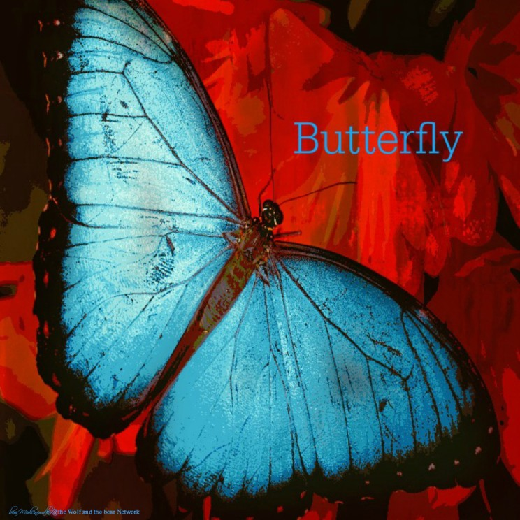 card 27 butterfly 1122