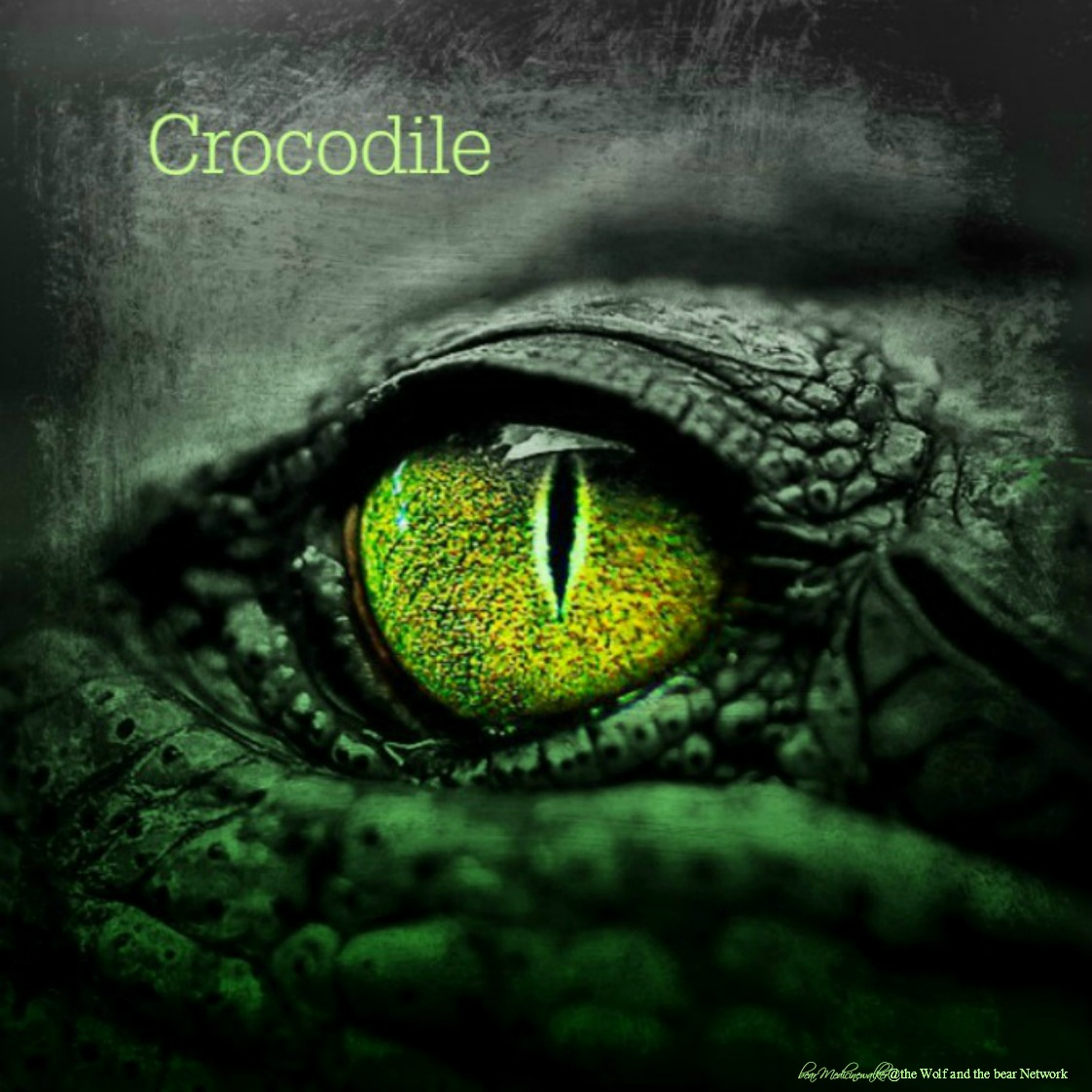 card 1 crocodile 1122