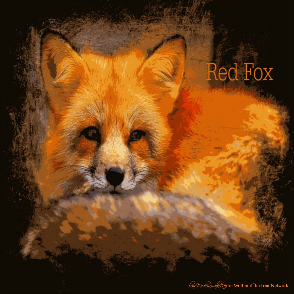 card 35 Red Fox 1122