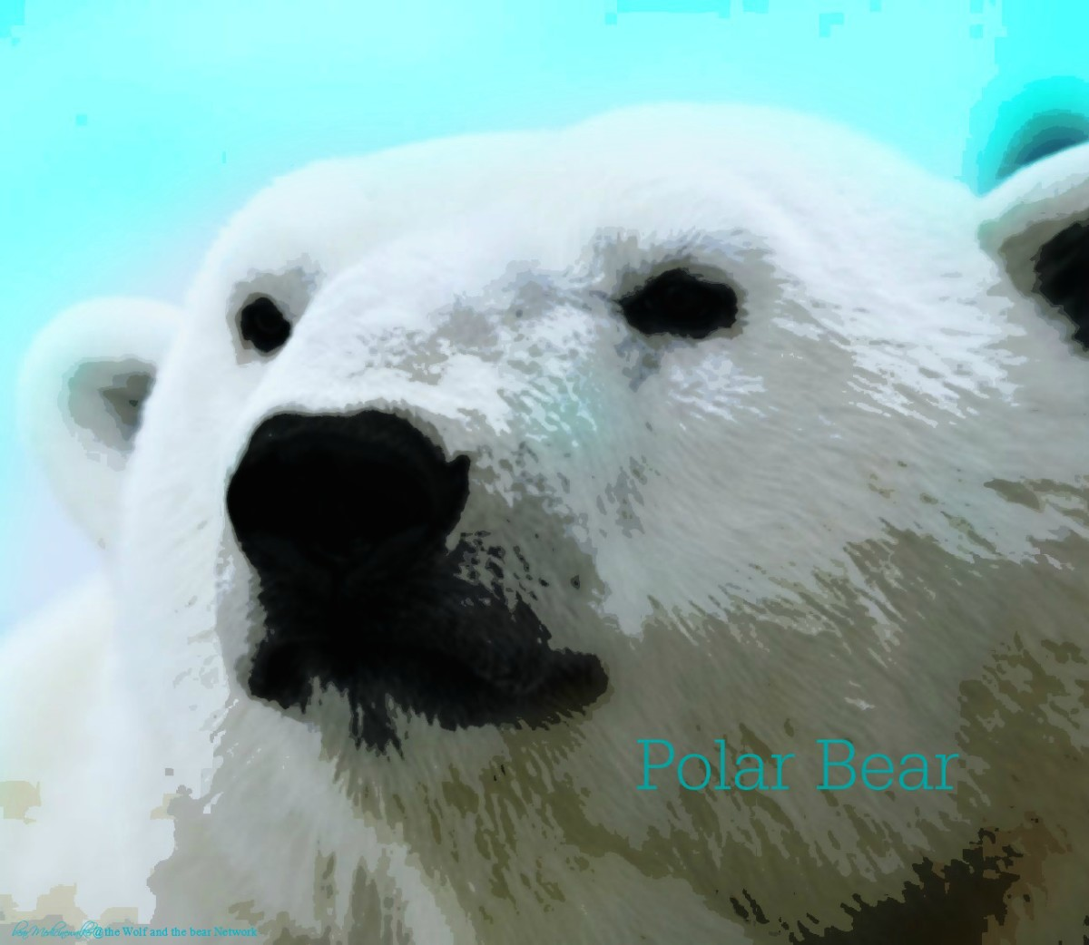 card 51 Polar Bear