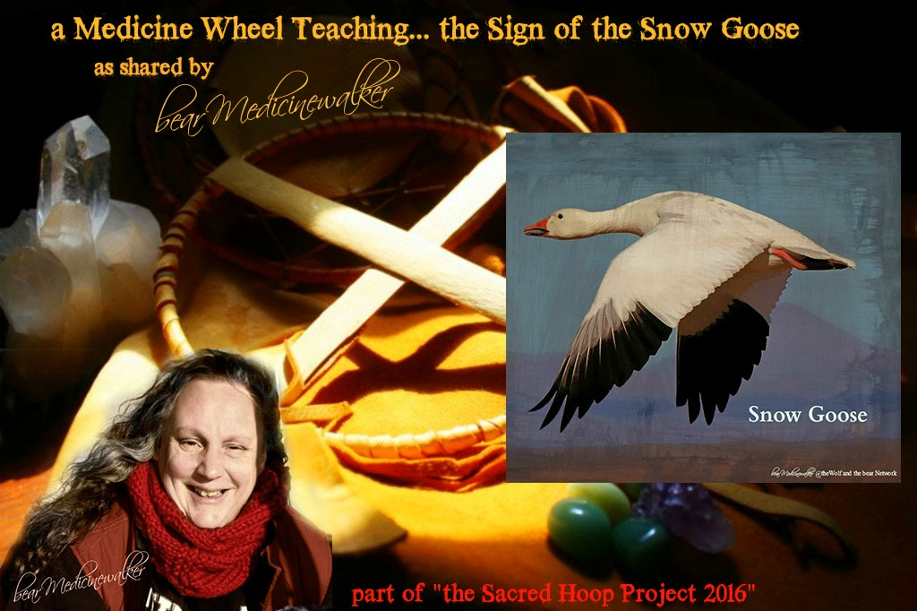 Medicine-Whee Snow Goose Teaching