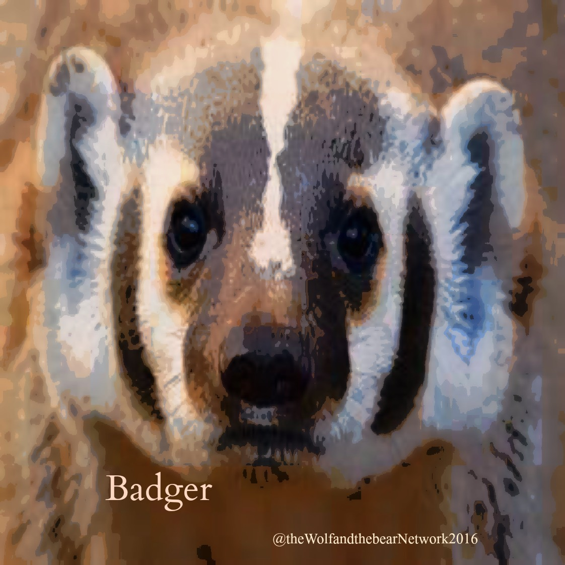 BADGER1122card 61
