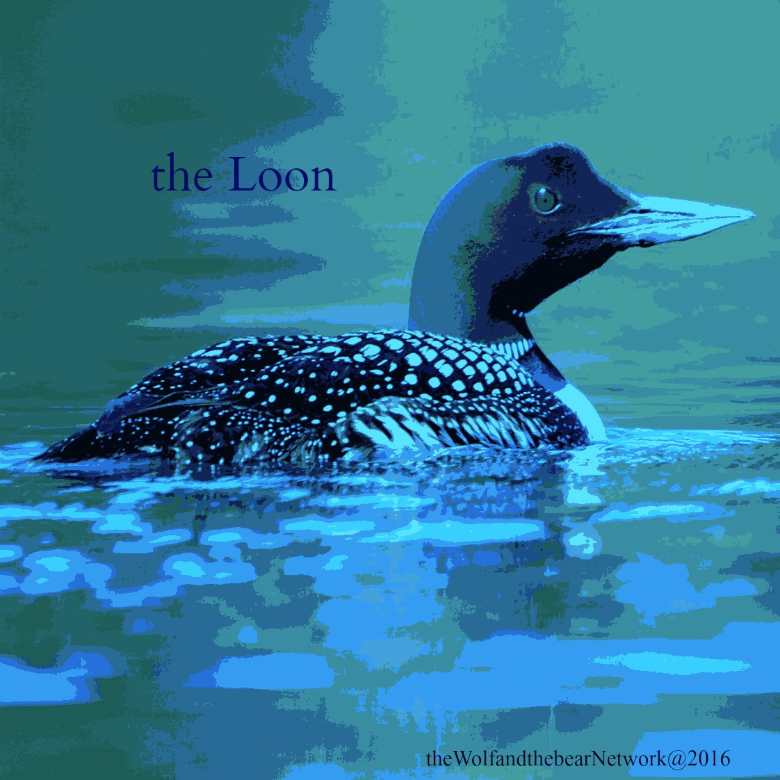 the Loon 63