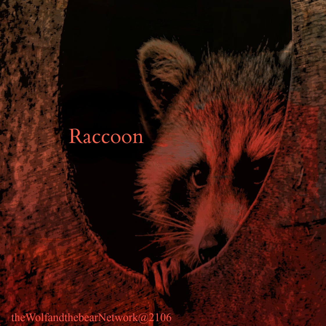 Racoonnew